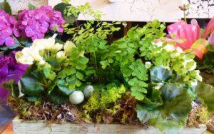 plant arragment nest
