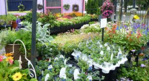 bedding plants 2