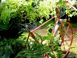 bicycle ferns