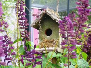 bird house flowers